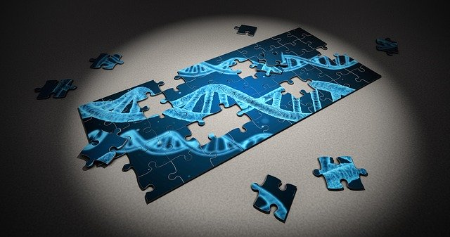 妊娠を左右する遺伝子発見